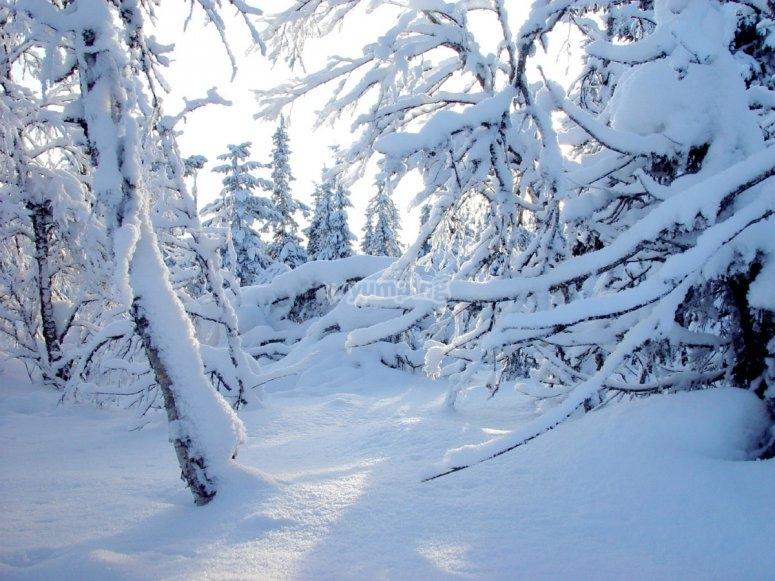 El bosque nevado