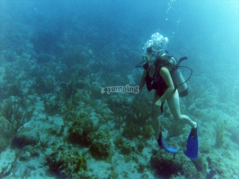 在太阳海岸进行水肺潜水