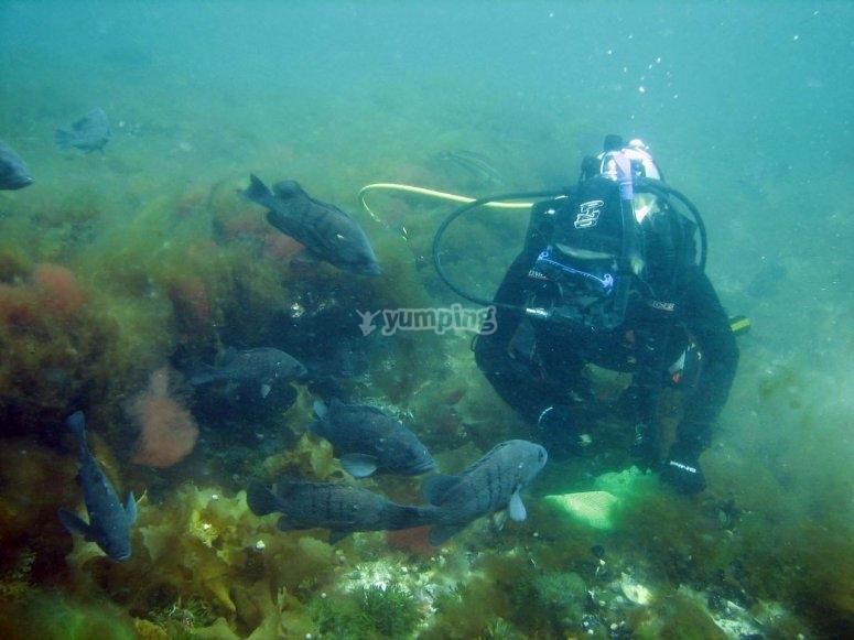 马贝拉的海洋生物