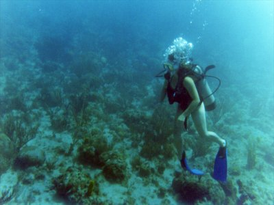 在马尔贝拉港全天潜水租赁