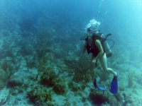 潜水在马贝拉