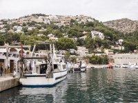 Visita guiada subasta pescado Jávea 1h