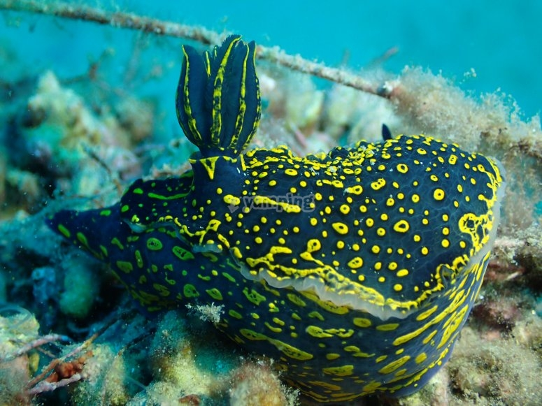 地中海丰富的海洋动物