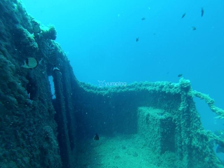 黄金海岸沉船的弓