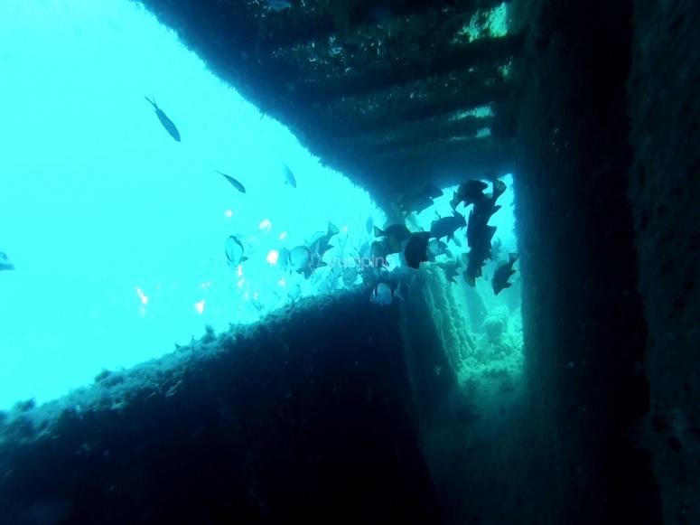 乘船出发潜水