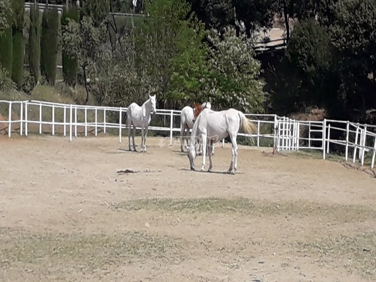 Grupo de caballos en manada