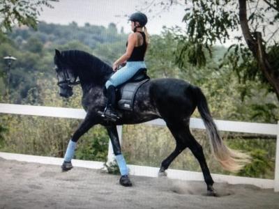 与马匹共存的日子蒙塞尼4小时