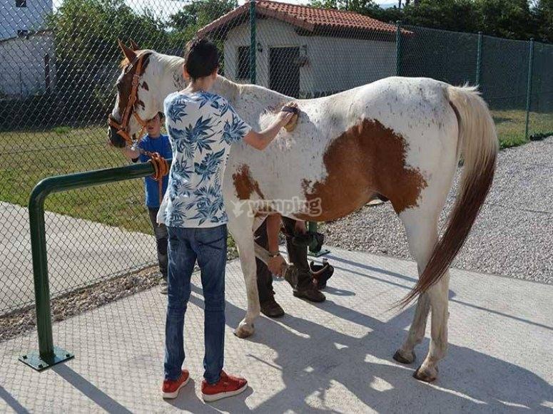 Child brushing on horseback