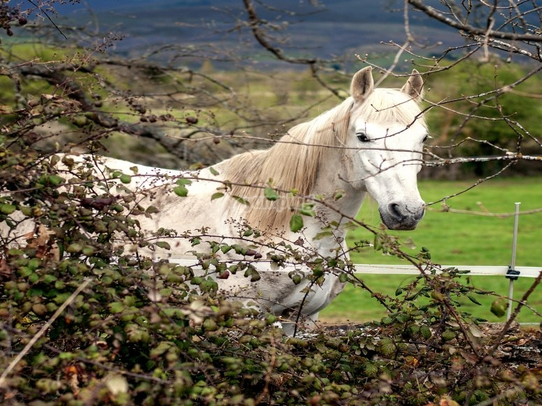 Clases de equitación 1 semana Burgos
