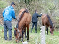 Contact with horses in Las Merindades