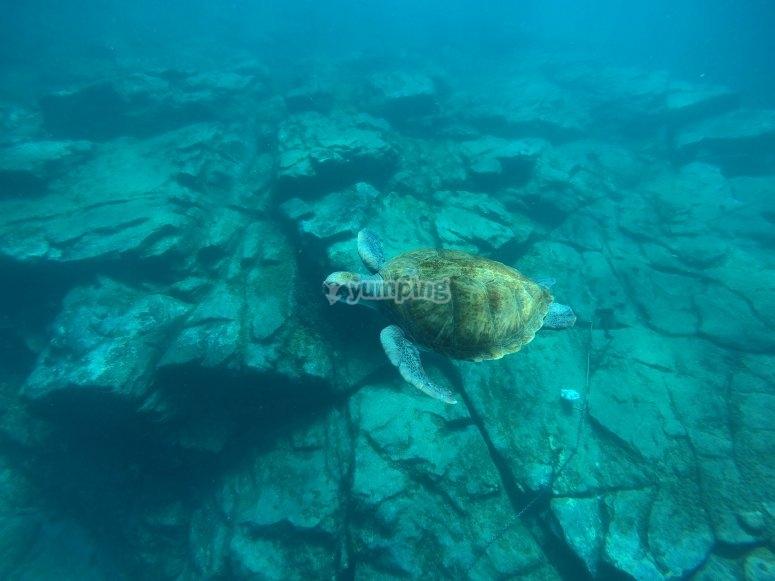 Rica fauna marina