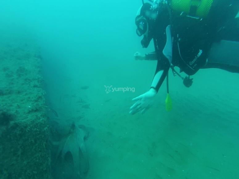在萨洛海滩潜水