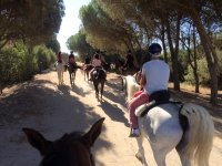 Group riding lesson in El Rocío 1 hour