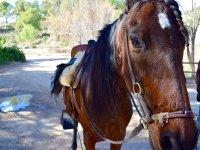 Caballo preparado para ruta a caballo en Villamarchante