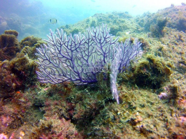 Grabación en HD fondo marino Estepona