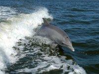 Delfín sobre el agua