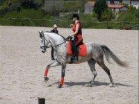 Equestrian clinic
