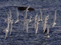 Conjunto de aves migratorias