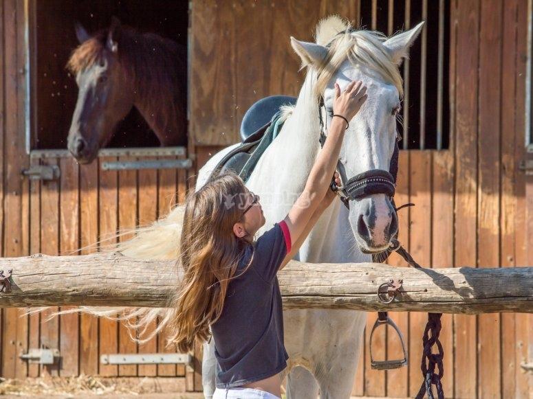 Ragazza accarezzando il cavallo