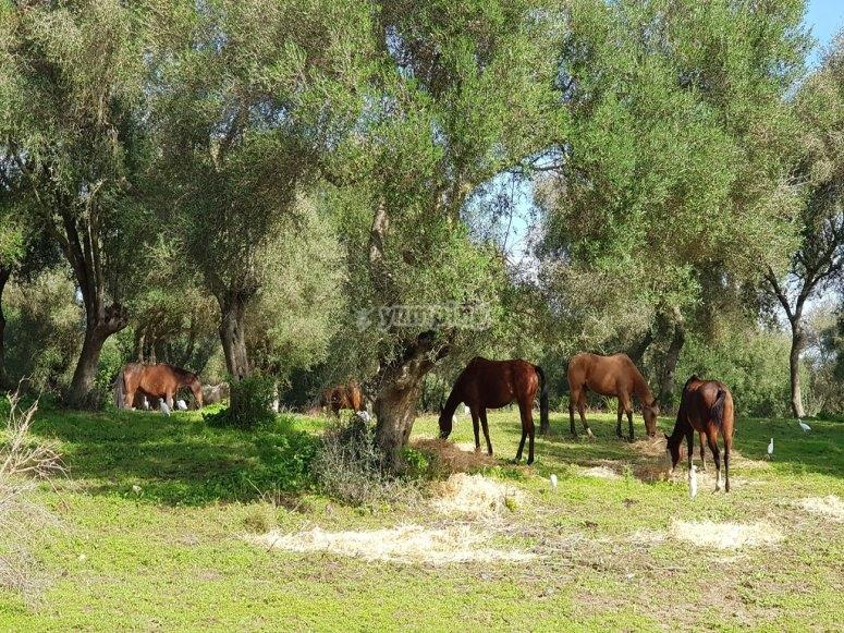 Negozi di campagne e cavalli