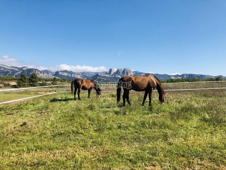 自由放牧的马匹