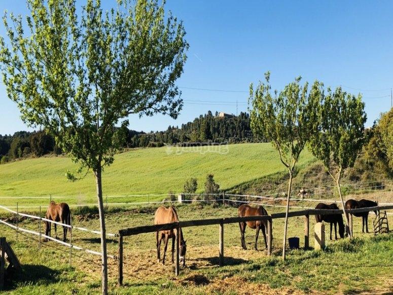 Finca con caballos al aire libre