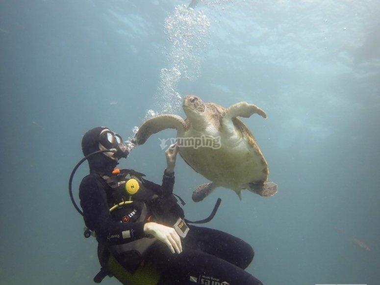 Junto a tortuga marina