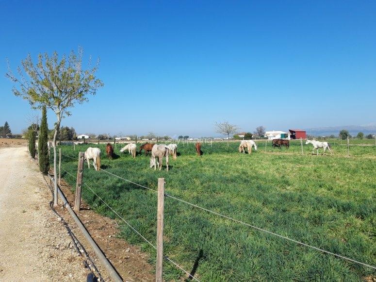 Horse riding center in Antequera