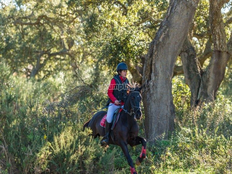 Equipment for horseback riding in Antequera