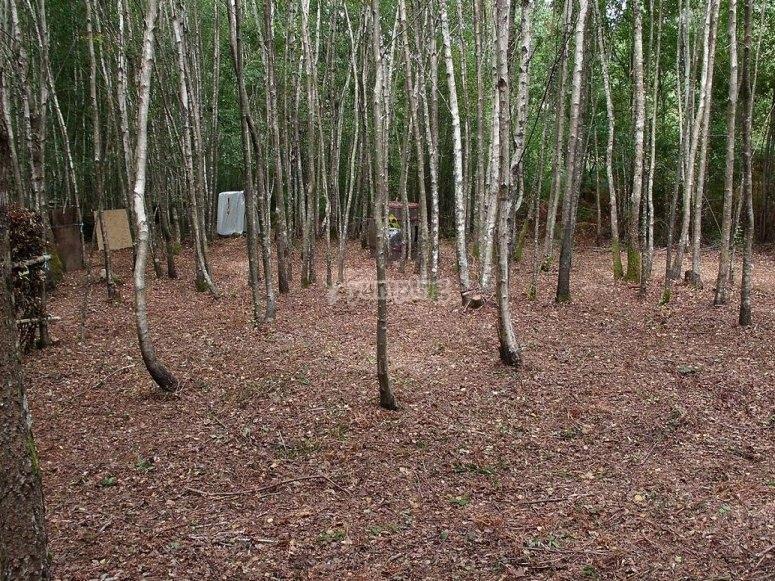 Bosque de Orense