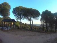 Camp among pines