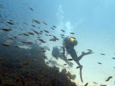Bautismo de buceo en Tarifa grupos reducidos