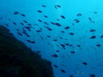 塔里法的潜水洗礼减少了团体