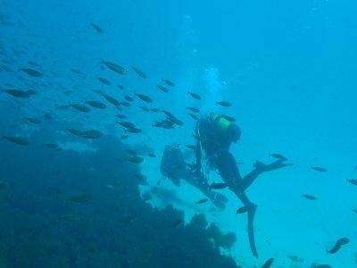 周末开放水域潜水员课程