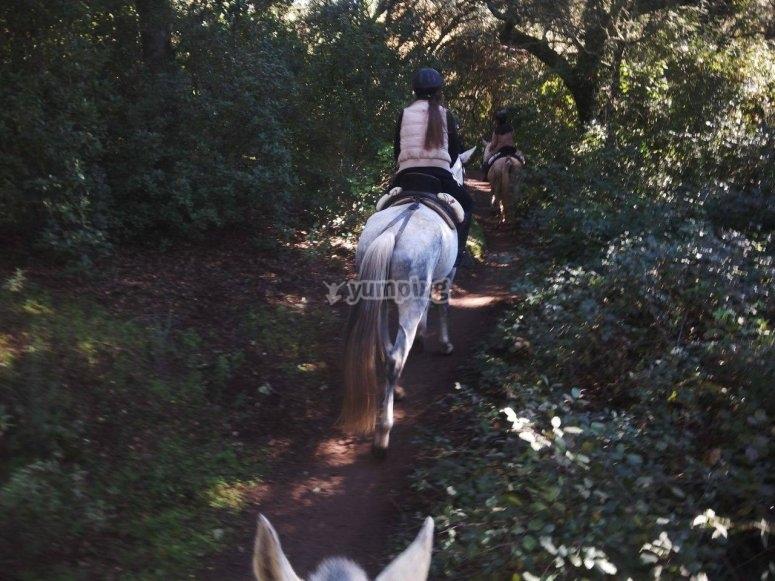 Ruta a caballo por el bosque Sierra Morena