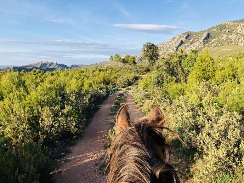 原生植被中的骑马
