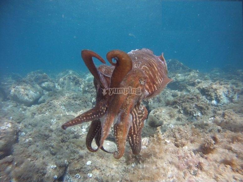 Pulpo en el fondo del mar