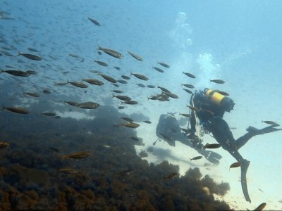 Curso de buceo de Nitrox en costa de Tarifa