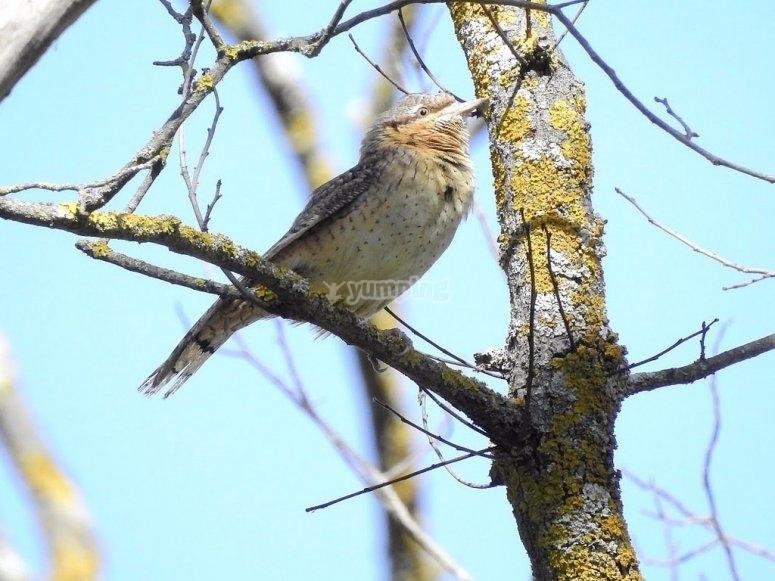 Birdwatching in Archidona