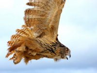 马拉加的鸟类学路线