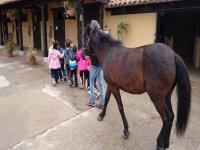children walking next to a horse