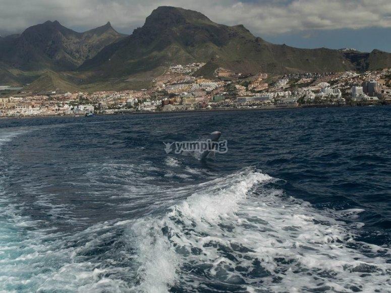 Canaria's coast on a boat