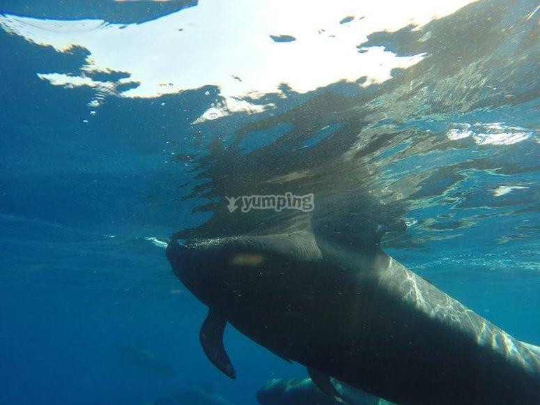 Paseo en barco para avistar delfines