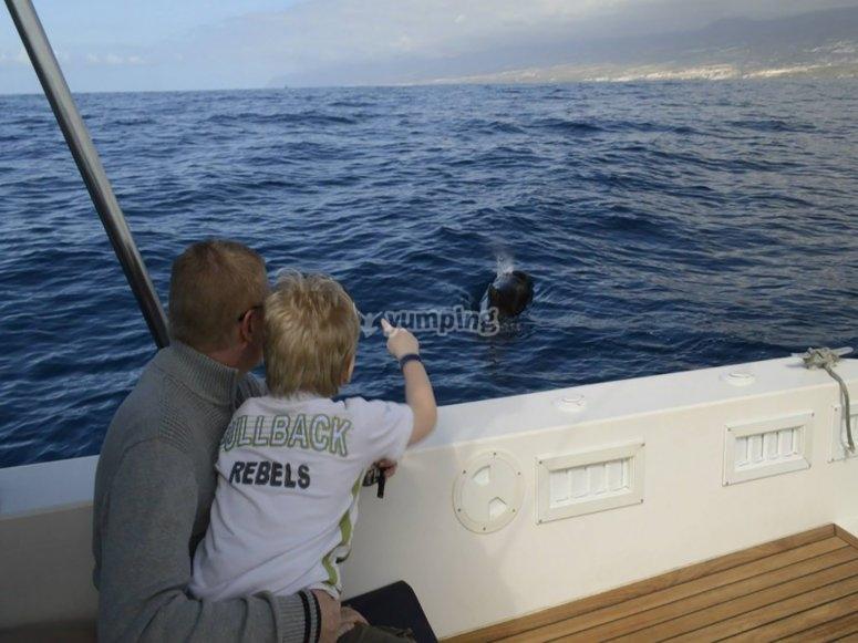 Avistamiento de cetáceos en Adeje en familia