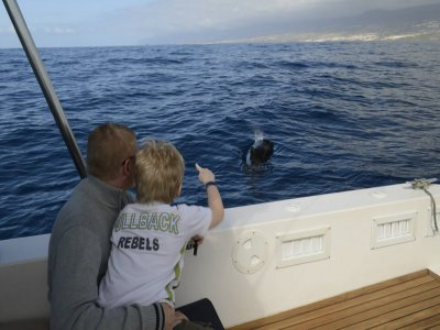 Cetacean sighting in Tenerife children 3 h