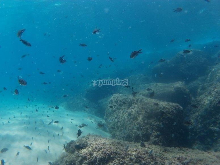 在塔拉戈纳进行首次潜水