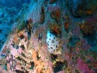 Conociendo la vida marina buceando