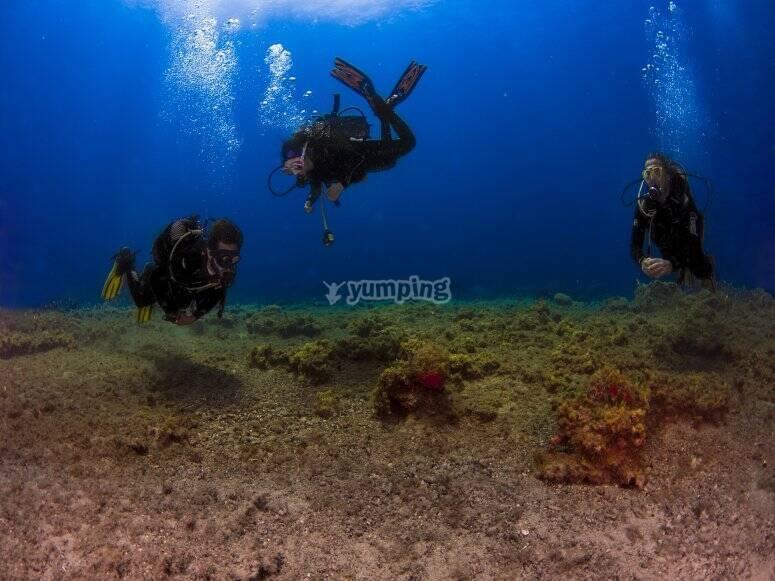 Inmersiones en aguas abiertas Arona