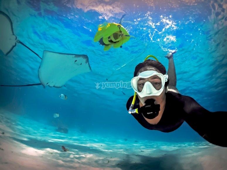 Vive la fauna marina
