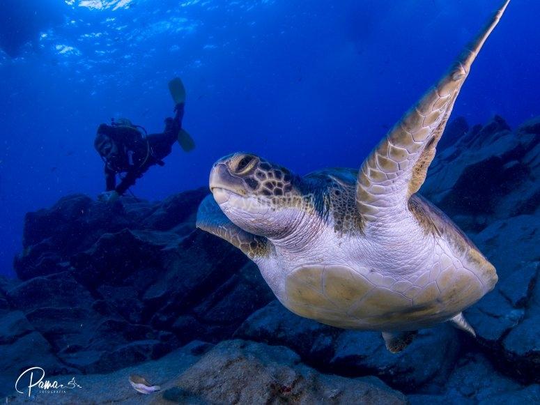 Bucea con tortugas